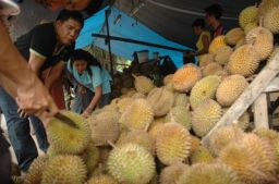 Durian Lahat